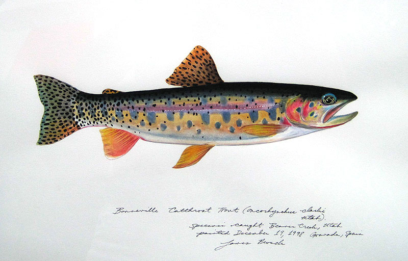 Jame Prosek Bonneville Trout James Prosek: The Audubon of Fish
