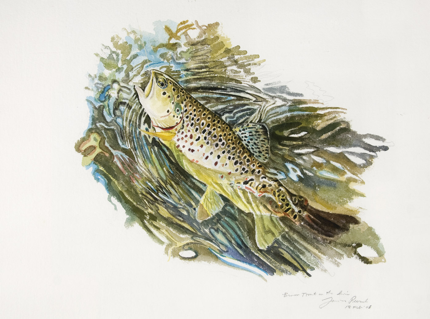James Prosek Brown Trout on Line James Prosek: The Audubon of Fish