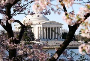 washington dc cherry blossom festival 300x202 Dressing to Visit Congress (or the White House)